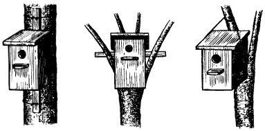Рис. 8. Способы крепления птичьих домиков